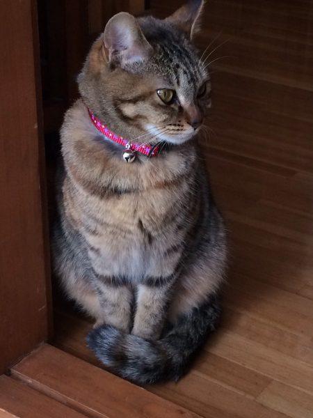 猫の日の前日にやってきたお嬢さん【日々諸々】
